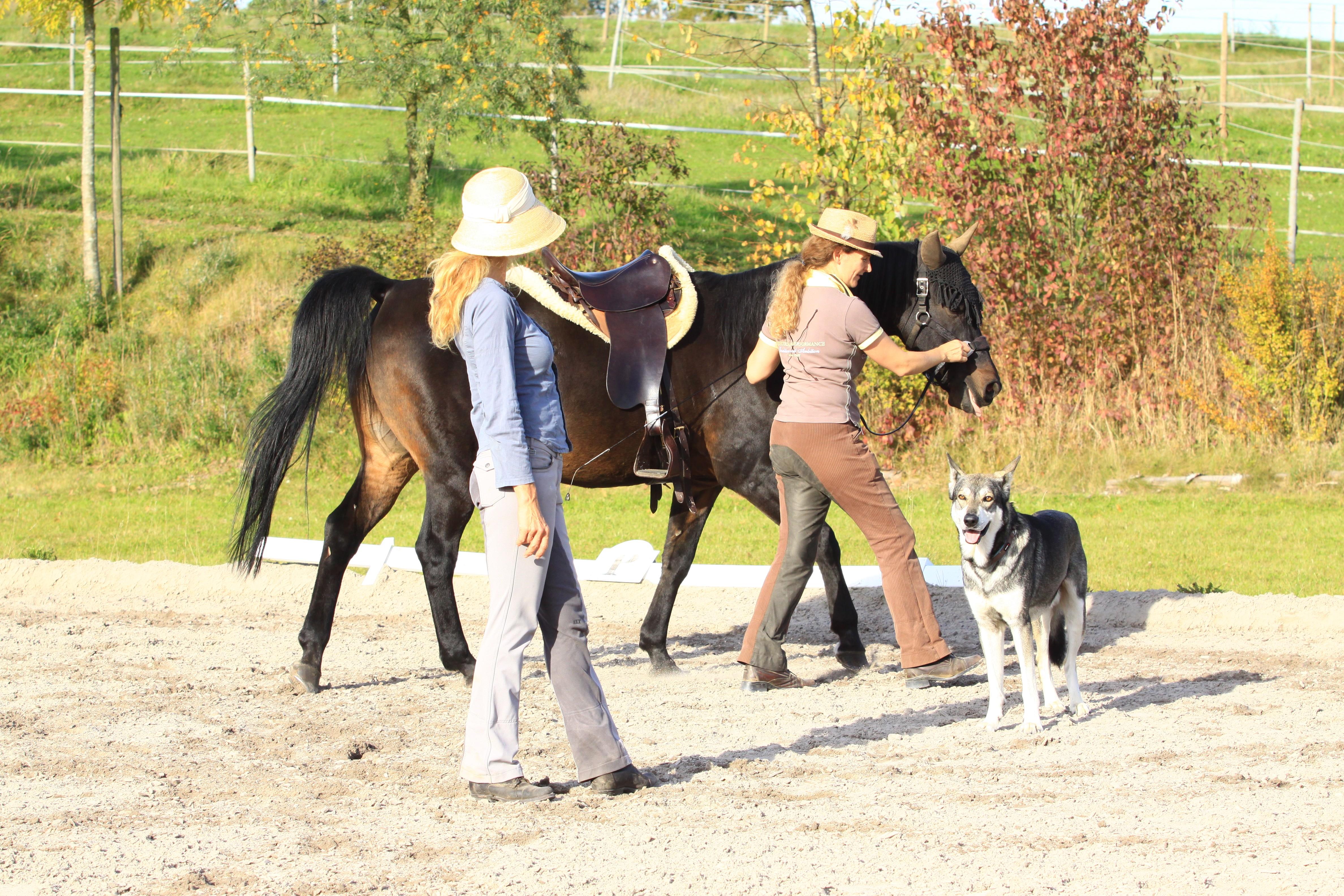 Pferd Reiten Lernen Und Reiter Reiten Lernen